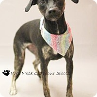 Adopt A Pet :: Marley - Lancaster, OH