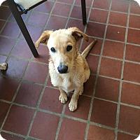 Adopt A Pet :: Clayton - Cumming, GA