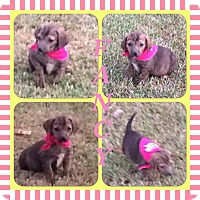 Adopt A Pet :: Fancy meet me 9/18 - Manchester, CT