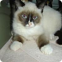Adopt A Pet :: Arnie - Mundelein, IL