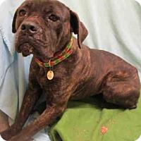 Adopt A Pet :: ZOEY - Upper Marlboro, MD