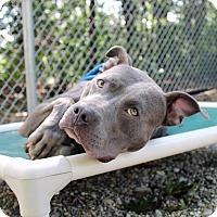Adopt A Pet :: Coo Jabooski - Troy, MI