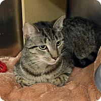 Adopt A Pet :: Thorn - Colmar, PA