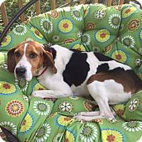 Adopt A Pet :: Annie - Youngstown, OH