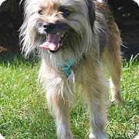 Adopt A Pet :: Chewey #1208 - Arlington Heights, IL