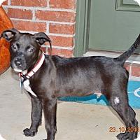 Adopt A Pet :: Sutton - Cranford, NJ