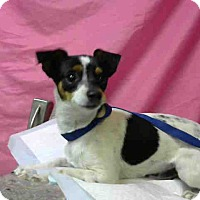 Adopt A Pet :: URGENT 10/29 @DEVORE - San Bernardino, CA