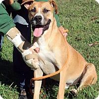 Adopt A Pet :: Django - Towson, MD