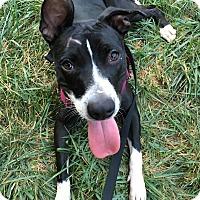 Adopt A Pet :: LuLu - Chico, CA