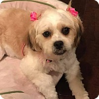 Adopt A Pet :: SuzieQ - Spring, TX