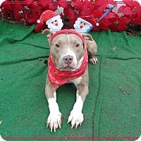 Adopt A Pet :: SHELLY - see video - Marietta, GA