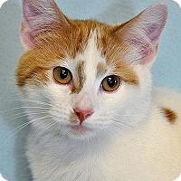 Adopt A Pet :: Dolce - Fort Leavenworth, KS