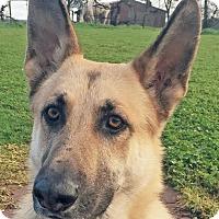 Adopt A Pet :: Daryl - Walnut Creek, CA