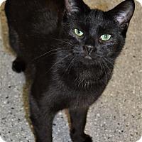 Adopt A Pet :: Angel - Michigan City, IN
