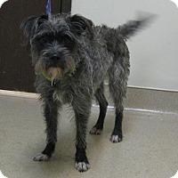 Adopt A Pet :: Ann - Gary, IN