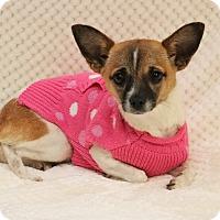 Adopt A Pet :: Tinsel - Yucaipa, CA