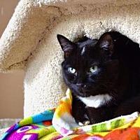 Adopt A Pet :: Marvin - Santa Monica, CA