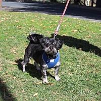 Adopt A Pet :: Saku - Fallston, MD