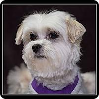 Adopt A Pet :: Dallas - Fort Braff, CA