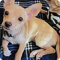 Adopt A Pet :: Anita - 4 lbs.-adoption pendin - Warwick, NY