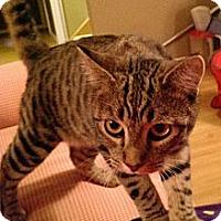 Adopt A Pet :: Nikita - Rochester, MN