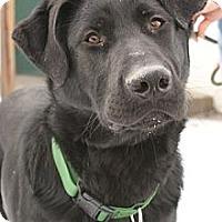 Adopt A Pet :: Tank - Rockaway, NJ
