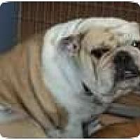 Adopt A Pet :: Lottie - San Diego, CA