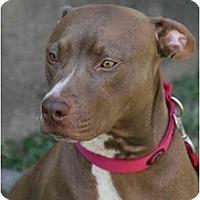 Adopt A Pet :: Marci - DFW, TX