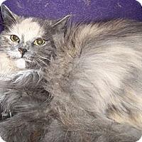 Adopt A Pet :: Calla Lilly - Ennis, TX