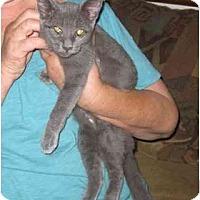 Adopt A Pet :: Sarah - Los Alamitos, CA