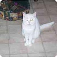 Adopt A Pet :: Emma Lue - Hamburg, NY