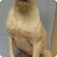 Adopt A Pet :: Tramp - Gary, IN