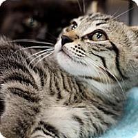Adopt A Pet :: Brownie - Sacramento, CA