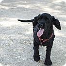 Adopt A Pet :: Naomi Campbell