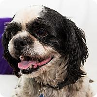 Adopt A Pet :: Zeville - Cumberland, MD