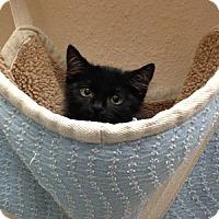Adopt A Pet :: Kink - Gilbert, AZ