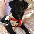 Adopt A Pet :: GYPSY