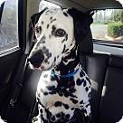 Adopt A Pet :: Jaspar