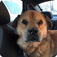 Adopt A Pet :: Timber-Adopted! - Detroit, MI