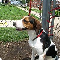Adopt A Pet :: Sophie - Lancaster, OH