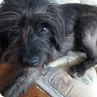 Adopt A Pet :: Bullet - Woodland, CA