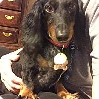 Adopt A Pet :: Gabril - Decatur, GA