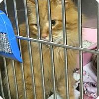 Adopt A Pet :: Goldie - Byron Center, MI