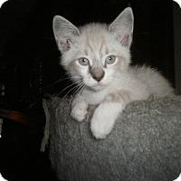 Adopt A Pet :: Logan (adoption pending) - Richmond, VA