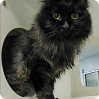 Adopt A Pet :: Bunny - Topeka, KS