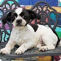 Adopt A Pet :: Spunky Harris - Urbana, OH