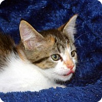 Adopt A Pet :: Conchita - Longview, WA