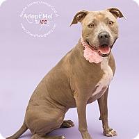 Adopt A Pet :: Chelsea - Apache Junction, AZ
