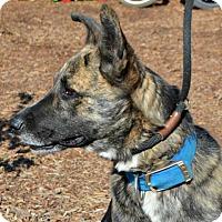 Adopt A Pet :: Zeb - Yreka, CA