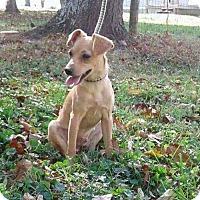Adopt A Pet :: Buster - Cincinnati, OH